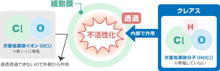 クレアス細胞膜浸透概念図