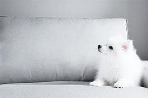 布ソファーのペットの臭い