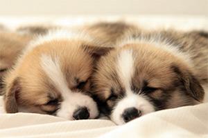 気になる犬の消臭なら次亜塩素酸クレアスがおすすめ